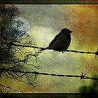 Bird on a wire by MarieG