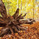 Stump by Manon Boily