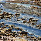 Rock Shelf - Swansea Heads NSW by Bev Woodman