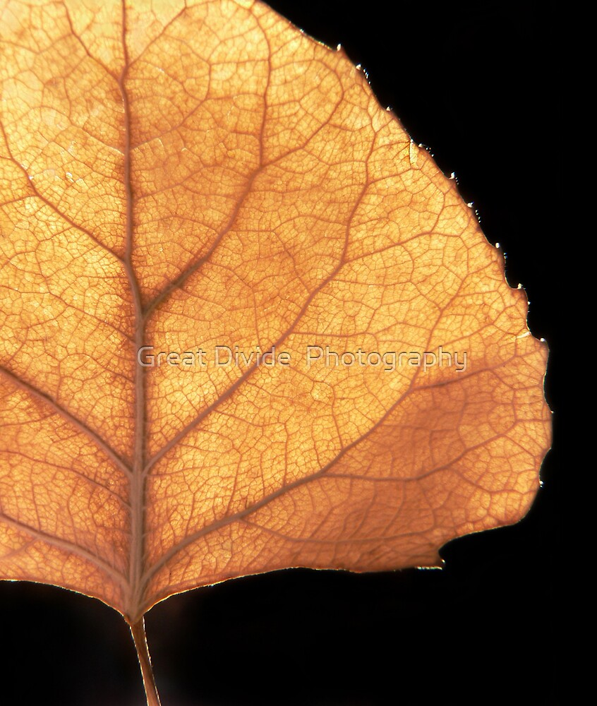 Golden Aspen Leaf by Great Divide  Photography