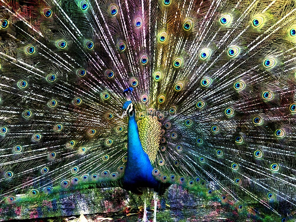 Bird of Beauty by sunshine0