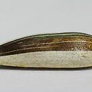 Mystery V - Sunflower seed by Biggzie