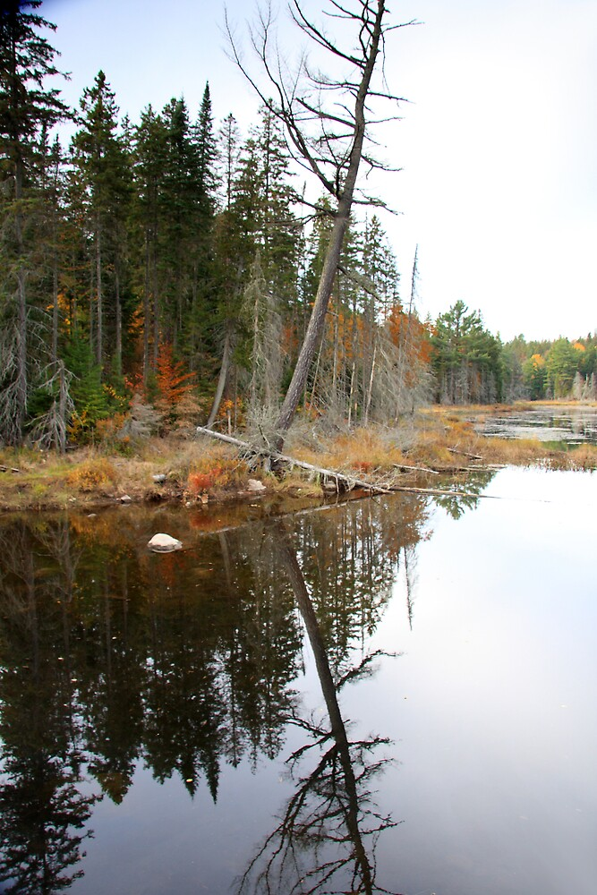 Algonquin Reflections I by Dave Law