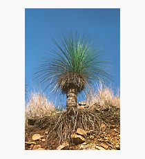 Grass Tree Photographic Print