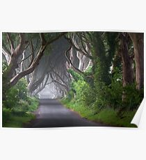 The Dark Hedges / Game of Thrones / Co Antrim / Northern Ireland Poster