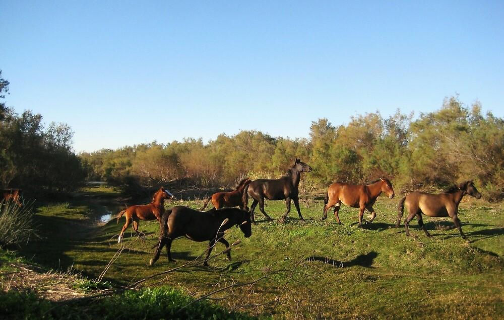 Free Horses - Seville, Spain by Raw Safari Print Shop