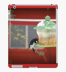 Acorn Woodpecker Feasting iPad Case/Skin
