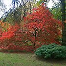 Autumn Colours 2014 by RedHillDigital