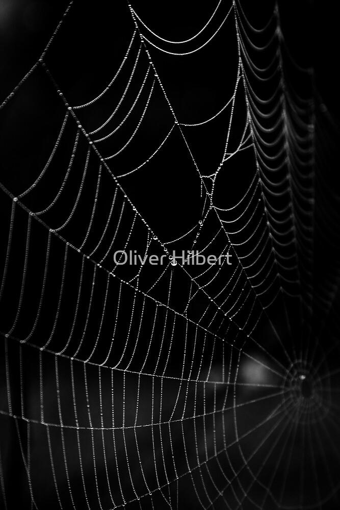 Spider Web Dew by Oliver Hilbert