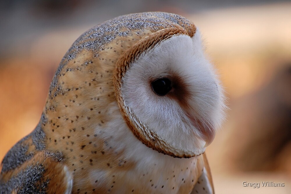 Profile of a Barn Owl by Gregg Williams