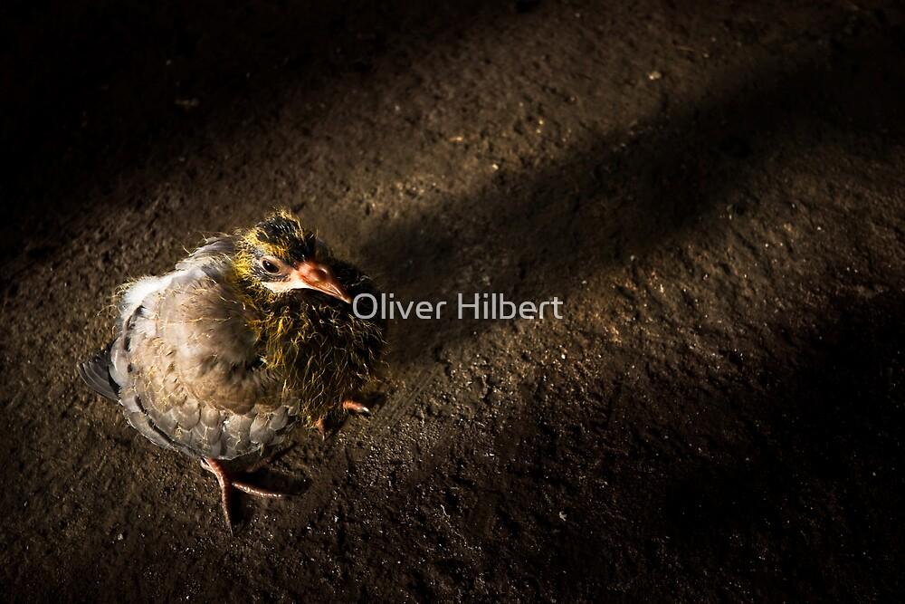 Little Bird by Oliver Hilbert