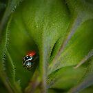 I See You Ladybug by KSkinner