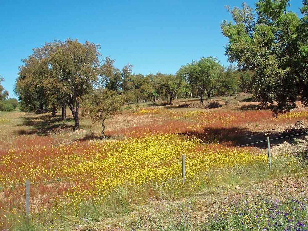 Alentejo - Flowered fields and cork oaks by presbi