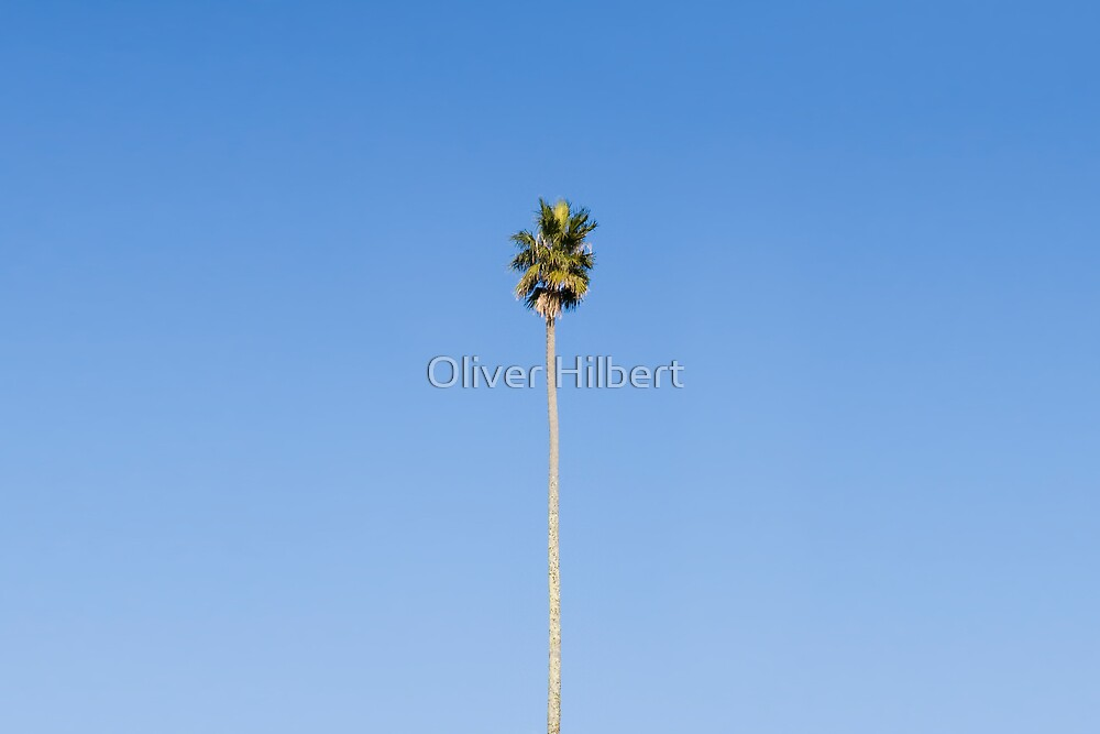 One Tree by Oliver Hilbert
