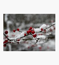 Holiday Berry Photographic Print