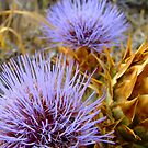 Thistle by Andy Mulley