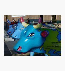 Three Cows on Parade, Ebrington Sq, Derry Photographic Print
