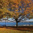 Palmer Park in Fall 7 by marybedy