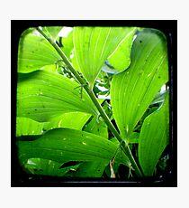 Green - TTV Photographic Print