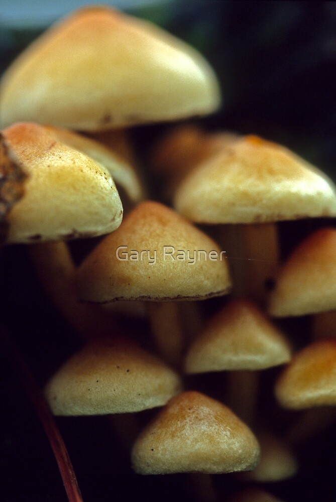 Toadstool group  by Gary Rayner