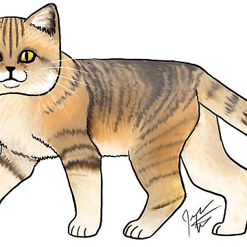 Sand Cat by jameson9101322