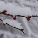 Last Snow by Ann Allerup