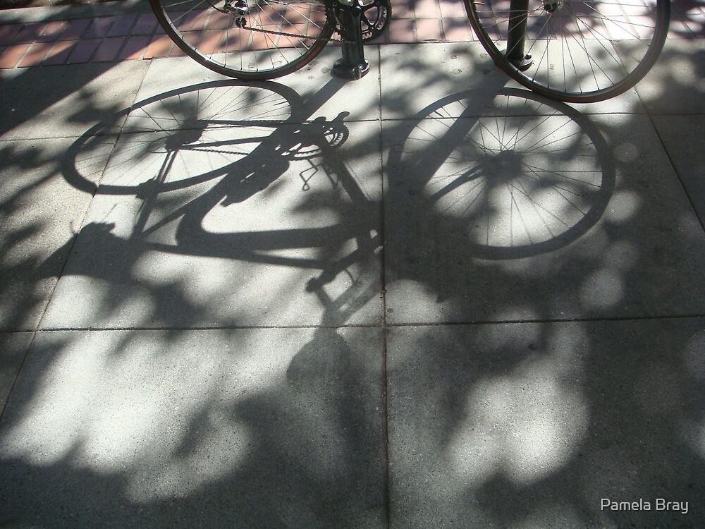 cycle light by Pamela Bray