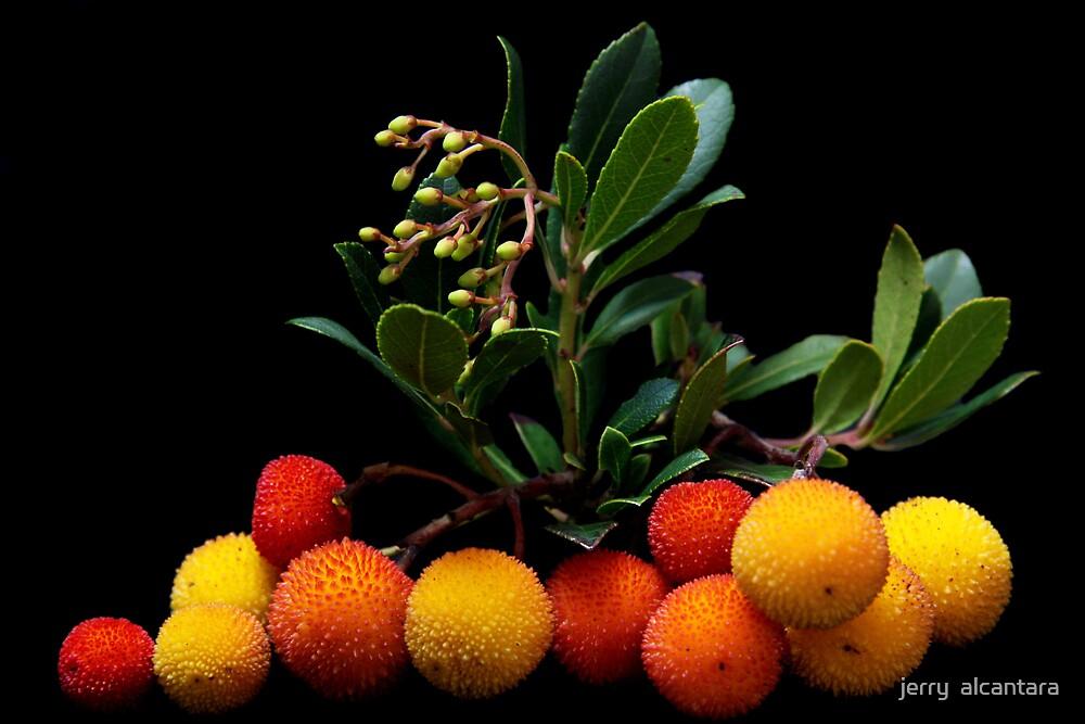 Beautiful Berries II by jerry  alcantara