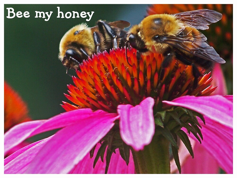 Bee my Honey by lynell