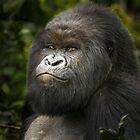 Gorilla III by Neville Jones