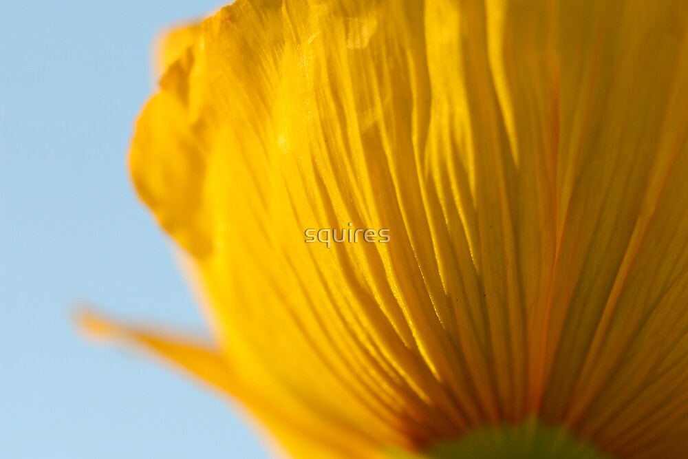 Flower 8 by squires