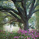 Azaleas and Oaks by Jonicool