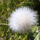 make a wish~* by megantaylor
