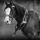 Days Gone By - Clydesdale in Harness by Michelle Wrighton
