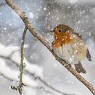 Robin in the snow by alan tunnicliffe