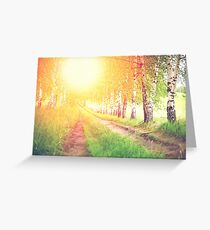 Alley of green birches against sunrise Greeting Card