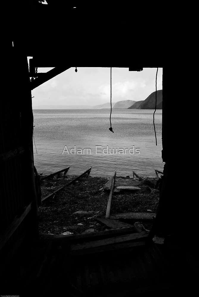 Looking out the shed by Adam Edwards