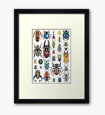 Beetle Collection Framed Print