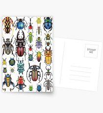 Käfer-Sammlung Postkarten