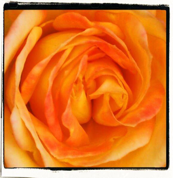 apricot heart by scarlettheartt