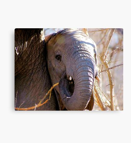 A TRUNK AND TUSKS Canvas Print