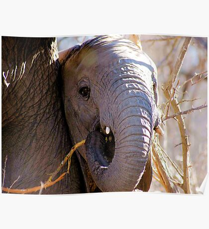 A TRUNK AND TUSKS Poster
