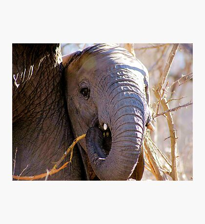 A TRUNK AND TUSKS Photographic Print