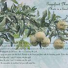 Grapefruit Marmalade by Elaine Teague