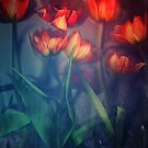 Orange Tulips by Suzette McGrath
