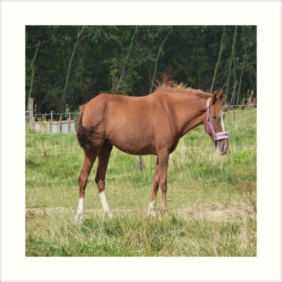 Braunes Pferd von MNA-Art