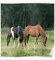 Black and white and brown horse Poster