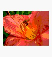 Day Lily Glow Photographic Print