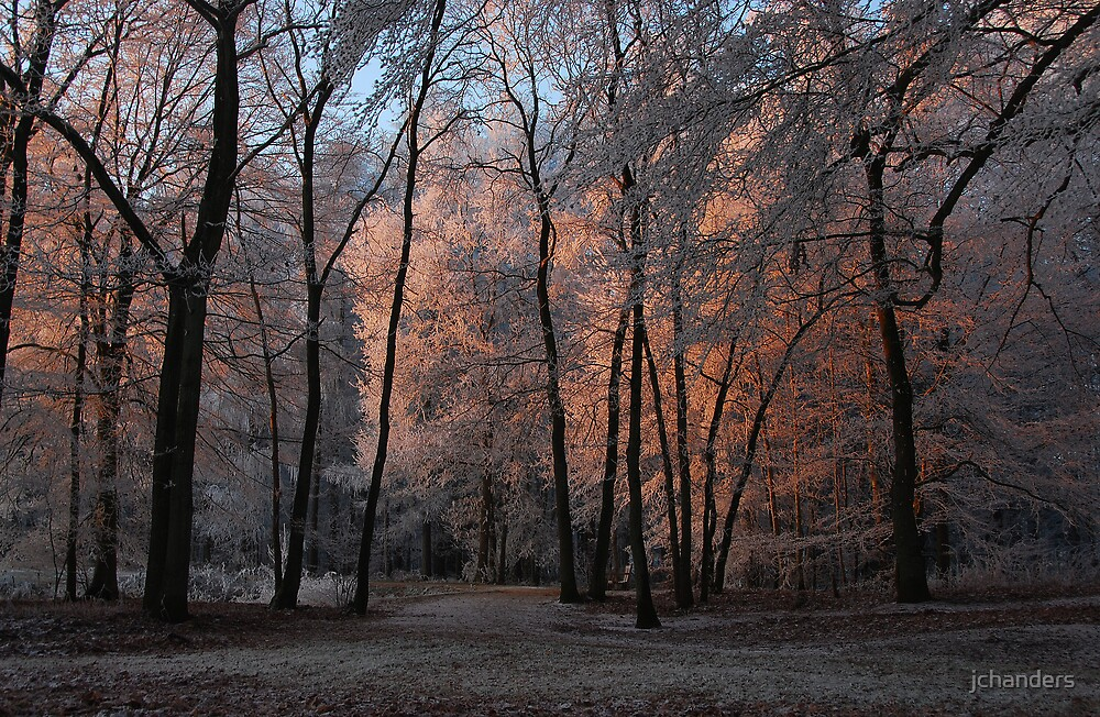 An enchanted winter world by jchanders
