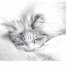 sleeping long-hair cat drawing by Mike Theuer